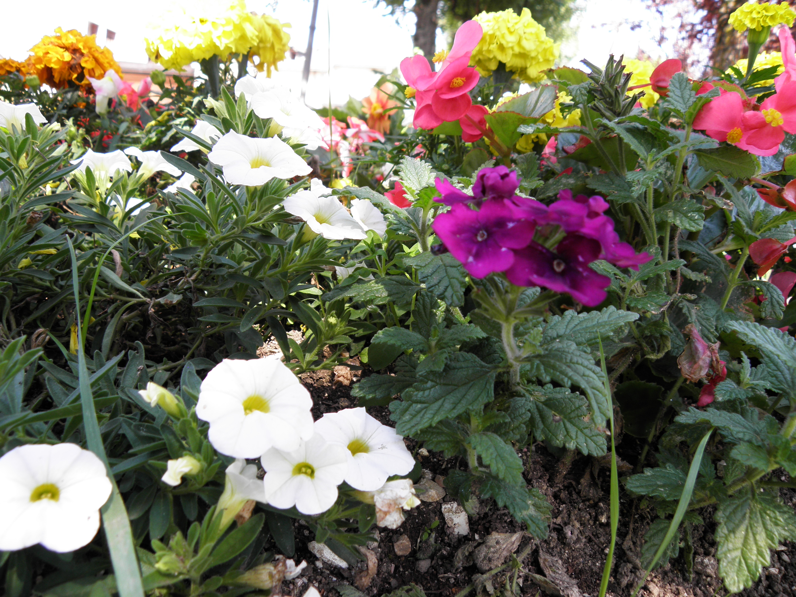 fiori3.jpg